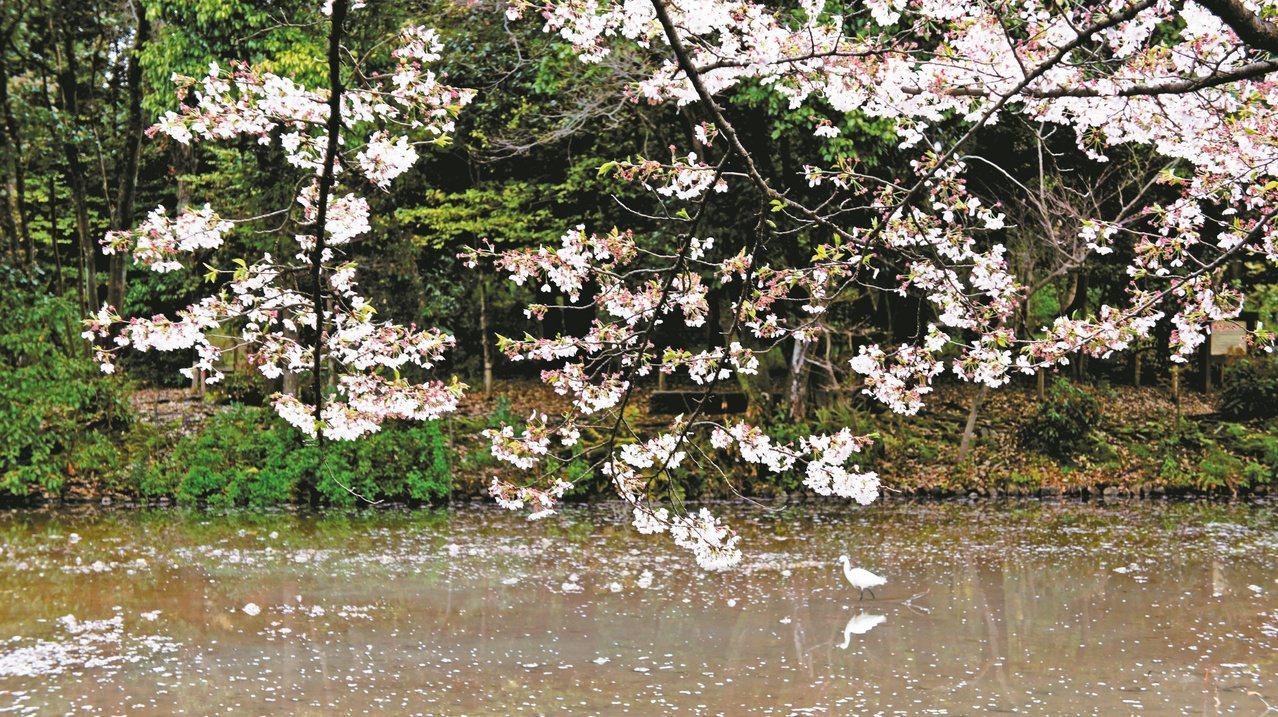京都是朱全斌與韓良露兩人初識的地方。 圖/有鹿文化提供