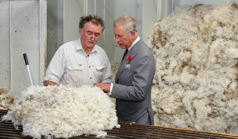 不太受歡迎的查爾斯王子參訪澳洲塔斯馬尼亞州羊毛中心。 (圖/歐新社)