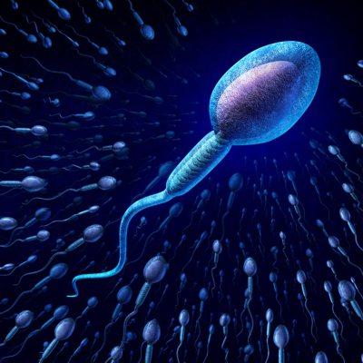 精子示意圖。 ingimage資料圖