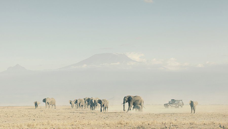 Land Rover贊助Born Free基金會進行銘記大象(Remembering Elephants)計劃,並與英國野生動物攝影師Margot Raggett合作舉辦攝影展,共同為瀕臨生存危機的大象保育工作盡一份心力。 LAND ROVER提供