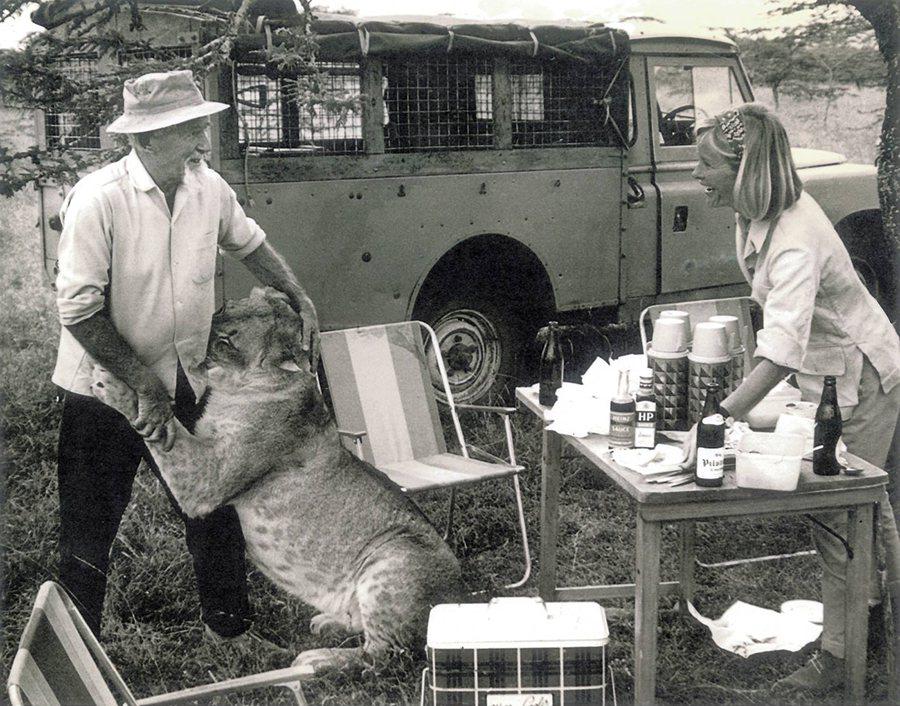 . 當年啟發Born Free、並以真實故事撰寫《獅子與我》這本書和並被拍成電影的探險家──George和Joy Adams,即是駕駛著Land Rover,幫助母幼獅Elsa回歸自然! LAND ROVER提供