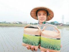 採自然耕作 農青蔡政峰養出健康米