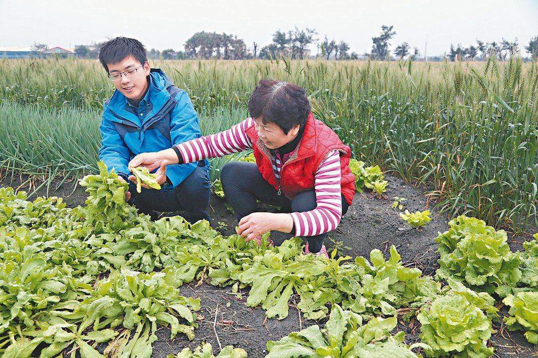 21歲的返鄉青農蔡翌璋(左)高中畢業當完兵退伍就回彰化大城老家務農,在阿嬤(右)...