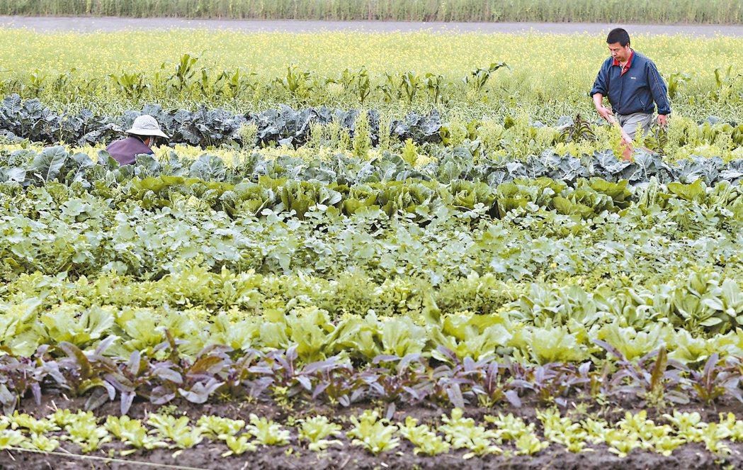 中科四期開發過程一波多折,最後,科學園區與農田共存。當地居民仍習慣每天清晨起床,...