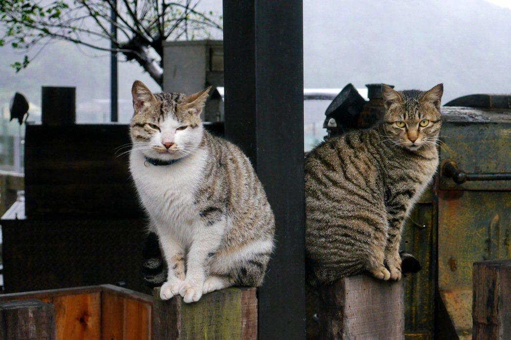 貓咪慵懶姿態讓人忍不住多拍幾張照片。 記者陳威任/攝影