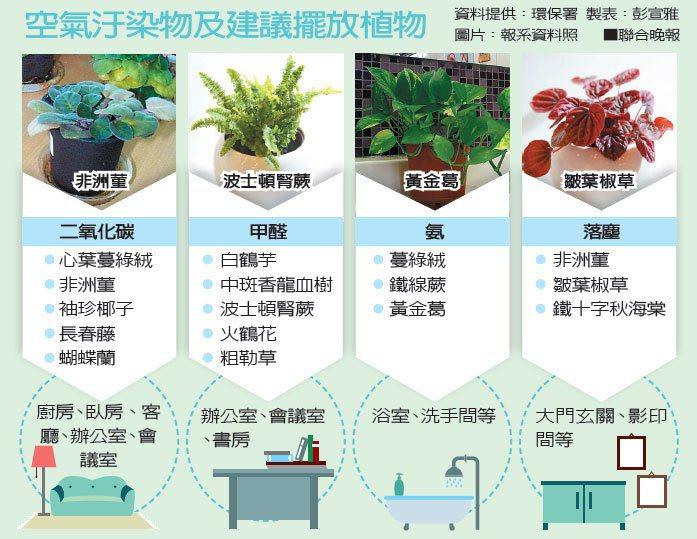 空氣汙染物及建議擺放植物。 圖/聯合晚報提供