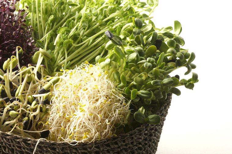 芽菜。聯合報系資料照 記者陳立凱/攝影