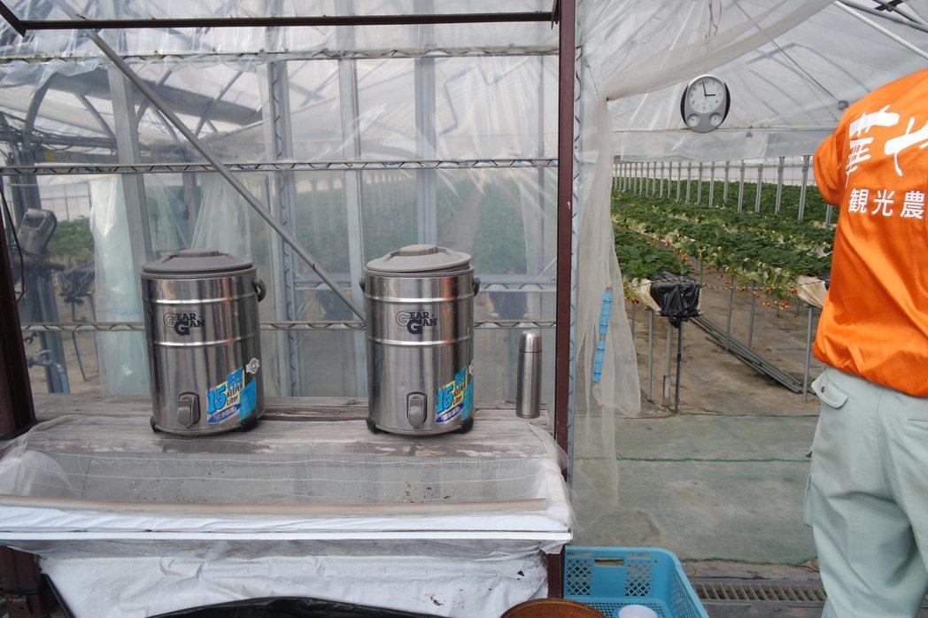 「華やぎ観光農園」的草莓園門口前有水桶,提供乾淨的水讓客人洗草莓。記者楊德宜/攝...