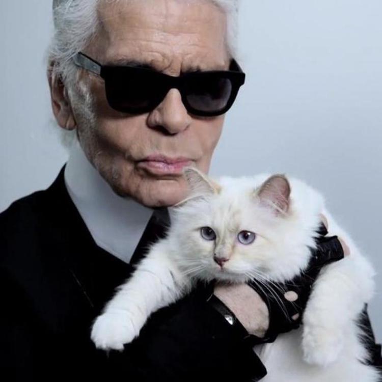 拉格斐的愛貓Choupette接拍廣告,擁有忠實粉絲,猶如國際巨星。圖/擷自臉書