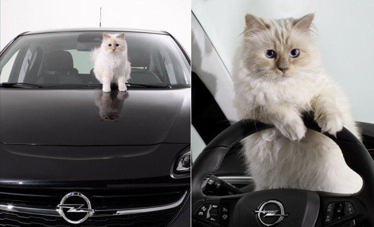 拉格斐的愛貓Choupette接拍Opel廣告。圖/Opel提供