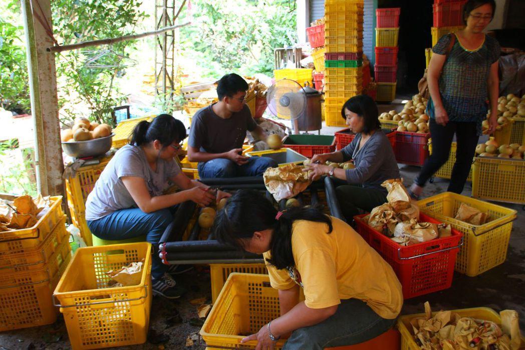 台南大學與中原大學師生到雙連國小和社區實地訪查,要靠行銷在地高接梨,替偏鄉小校找...
