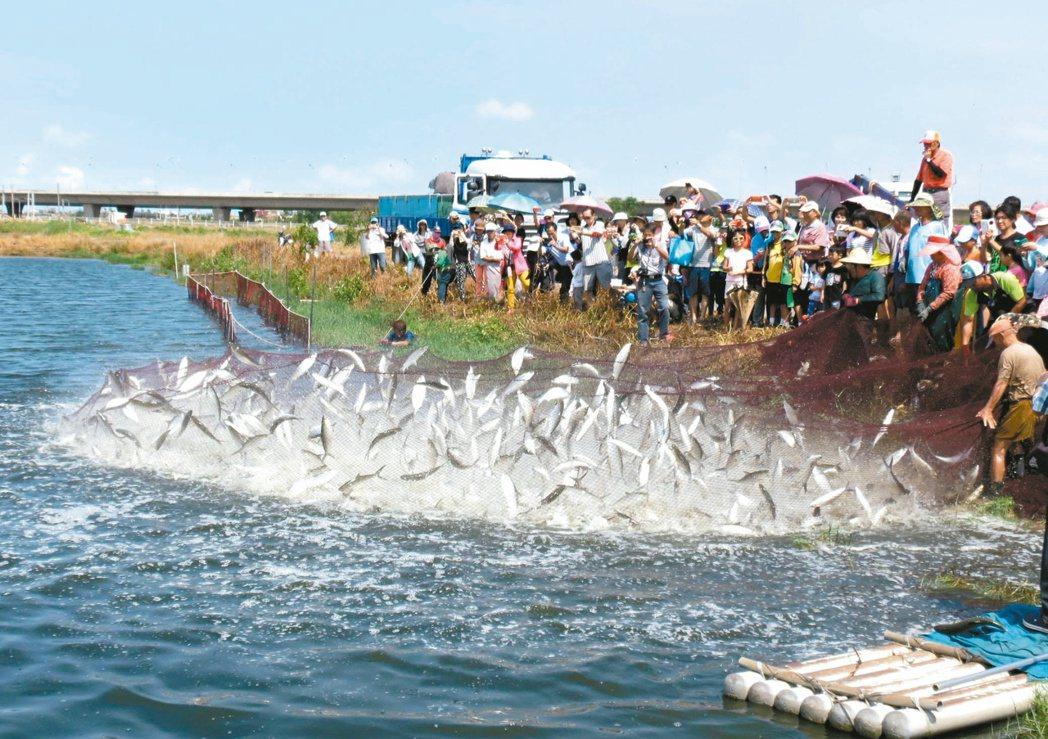 台南虱目魚銷往大陸佔大宗,漁民享受豐收的喜悅,卻也面對如果兩岸關係倒退,造成銷路...
