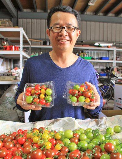 太保農會第七產銷班農民謝俊宏表示,彩色小果番茄色彩繽紛、口感甘甜,對小朋友也具吸...