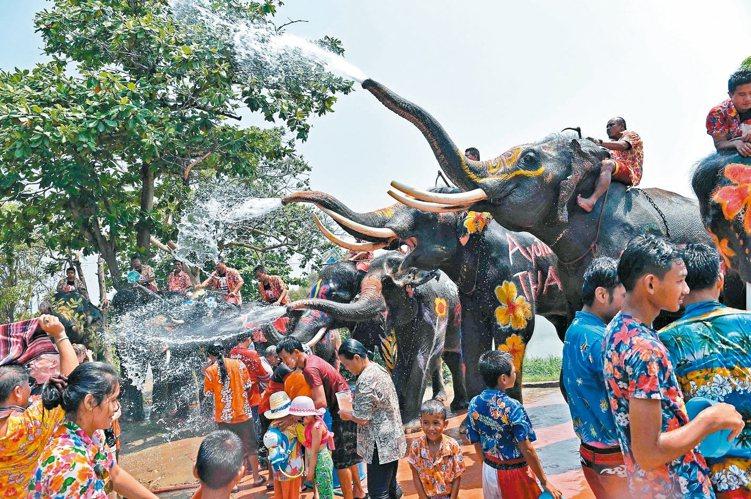 泰國一年一度的潑水節,民眾和大象同歡慶祝新年到來。
