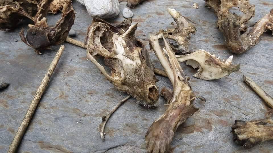 被吃剩的獸骨。 圖/李宜龍提供
