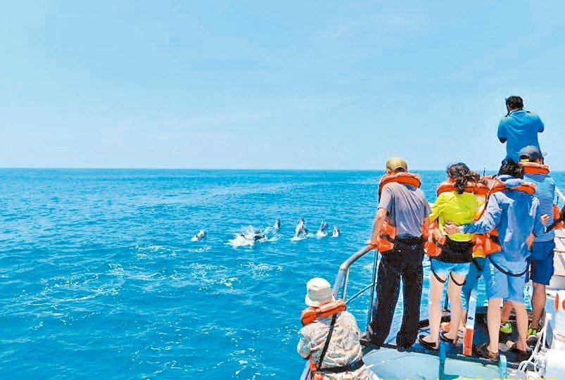 台東出海賞鯨豚季節登場,業者推出母親節優惠活動,鼓勵親子同遊東海岸。各種可愛的鯨...