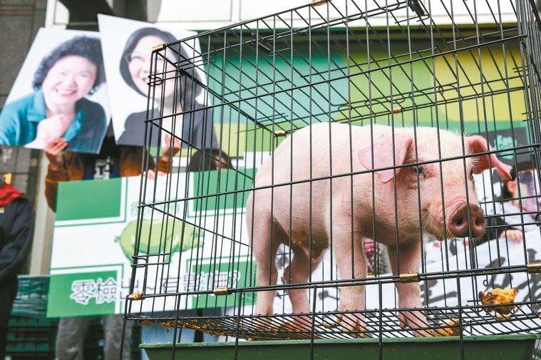 圖為2016總統選舉期間,豬農到蔡英文競選總部抗議蔡的美豬政策。 本報資料照片
