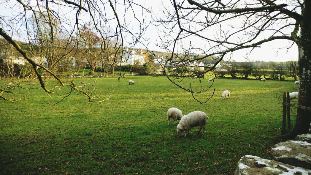 英國小鎮卡美爾擁有豐厚的歷史故事,鎮民努力維護讓小鎮保存了中世紀古樸的風貌,而近...