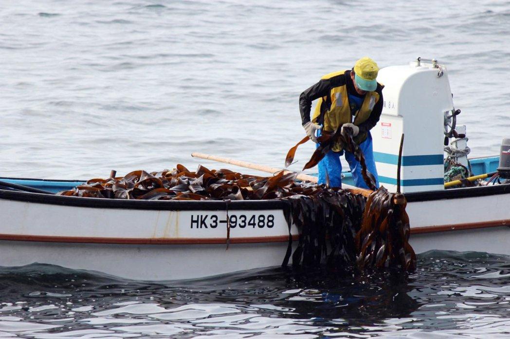 漁民搭小船出海,用長鉤採集成熟的昆布。 圖/山田物產公司提供