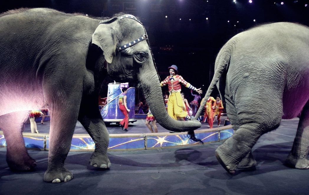11頭亞洲象在玲玲馬戲團的最後一場表演。 圖/美聯社