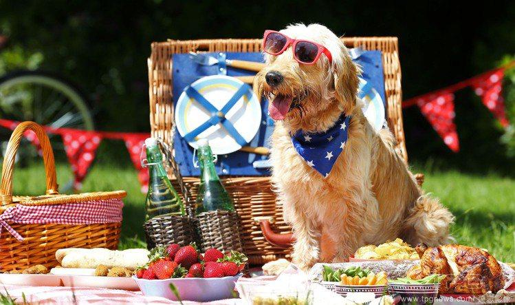 近來台灣吹起一股野餐熱潮,三五好友在草地上吃吃喝喝聊聊天,好不愜意!不過野餐穿搭...