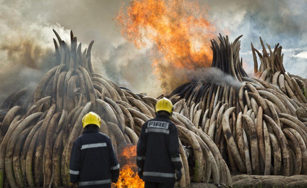 肯亞草原上,出現了那麼一場特別而悲傷的「火葬儀式」。 圖/美聯社