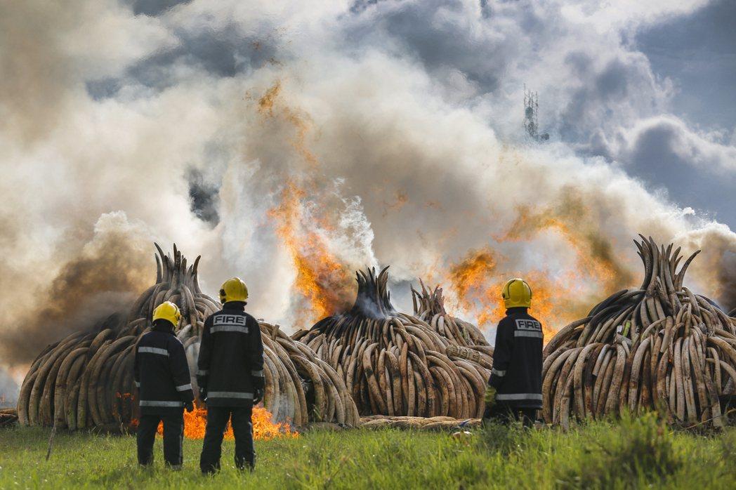 換算成生命,則代表著至少有350頭犀牛、6,000至7,000頭成年非洲象,因非...