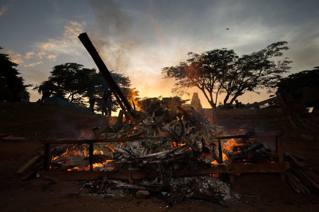 縱使烈焰焚天,龐大的贓物群卻至少得燒上一個禮拜的時間才能燒盡。 圖/美聯社