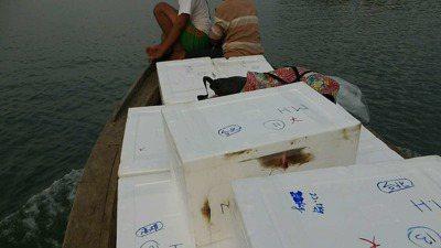 緬甸古亞漁貨。 記者黃義書/攝影