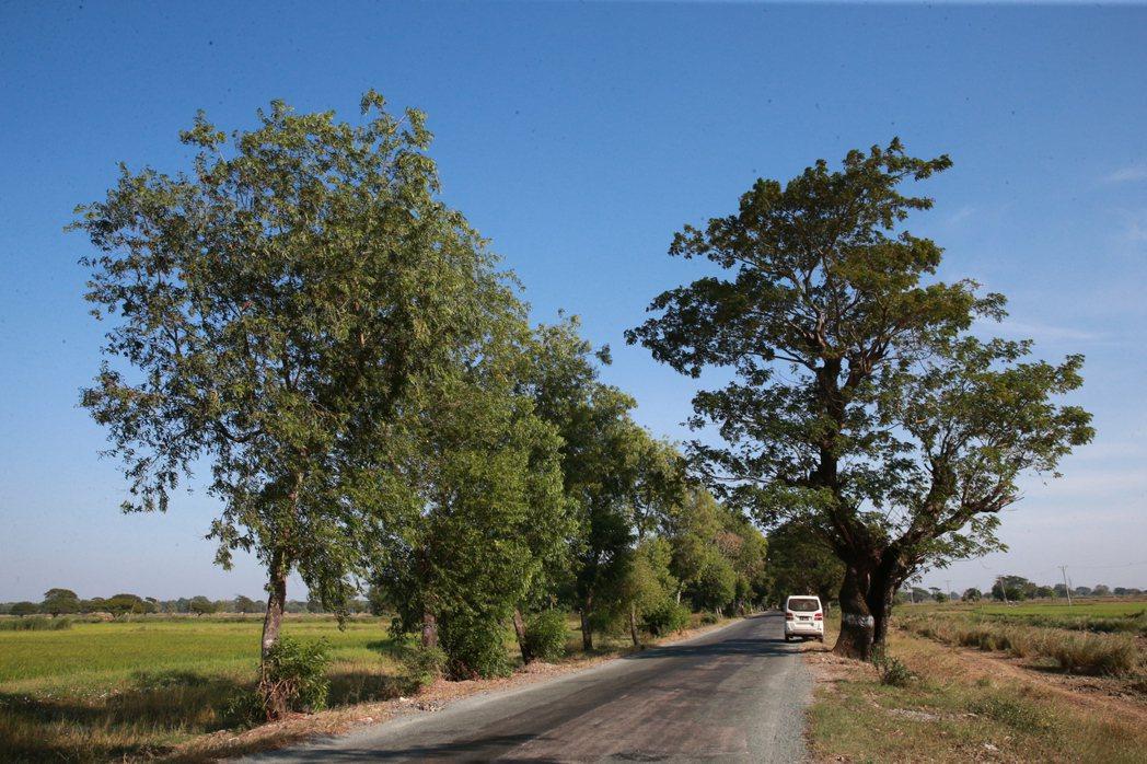 緬甸田野風光。 記者黃義書/攝影