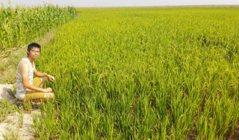 紐約客變緬甸稻農 蔡磊堅飄洋過海