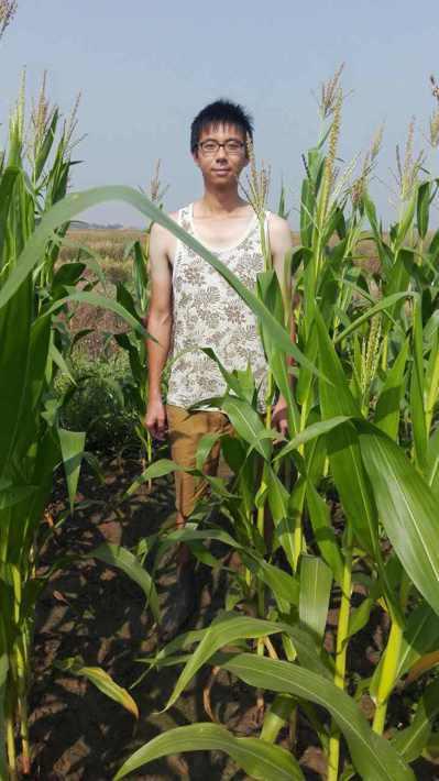 蔡磊堅的稻田收割之後會改種玉米等作物。 圖/蔡磊堅提供