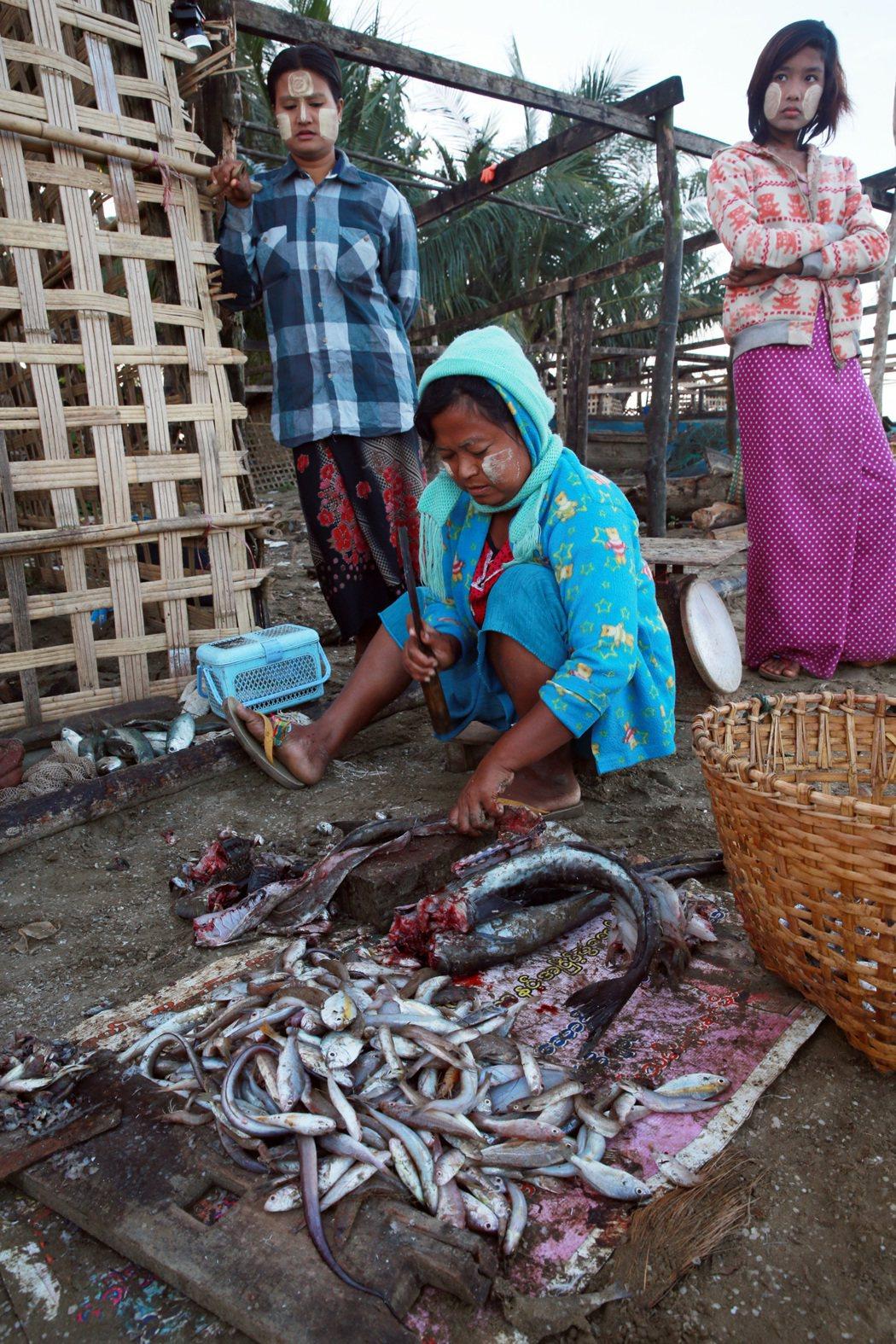 緬甸婦女在漁村殺魚販賣。 記者黃義書/攝影