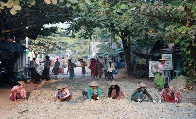 鋪路工程大多由女人包辦。 記者黃義書/攝影