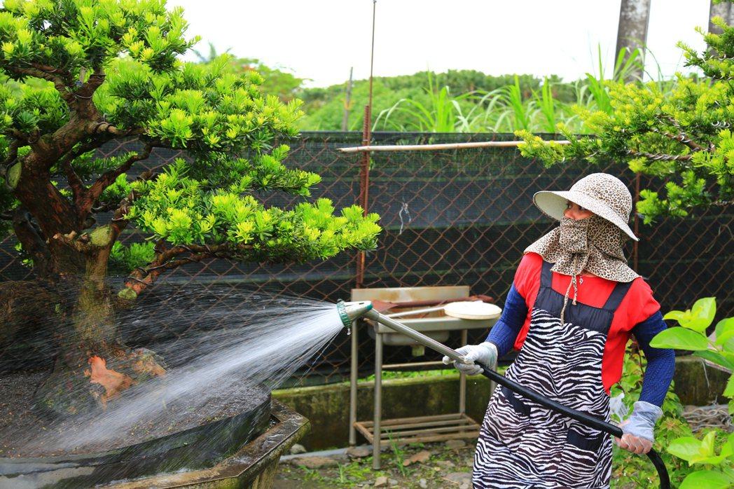 盆景藝術家李睿璿,花費一年多時間在龍泉找到理想的的空氣與水源,未料僅一牆之隔,即將迎來塑膠大廠。 圖/戴政輝(台灣黑熊)提供