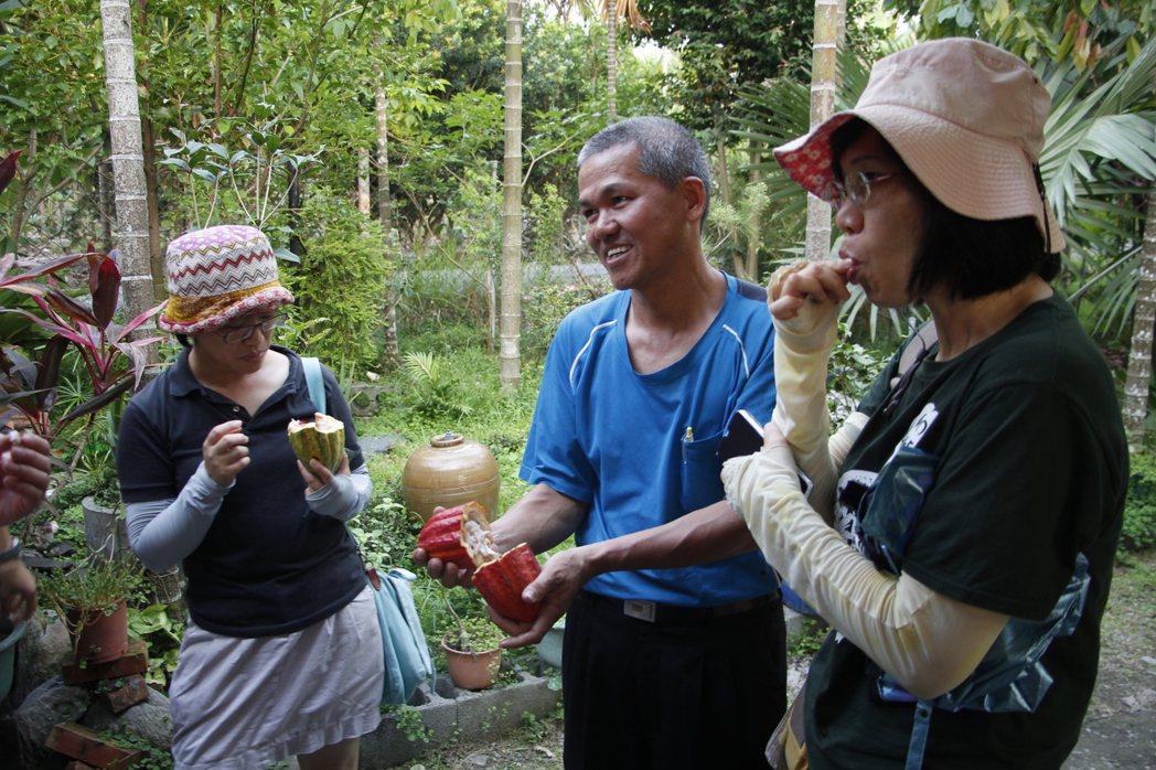 可可農蔡榮坤大哥驕傲的向來訪者展示他以自然農法栽培的可可豆。 圖/作者自攝