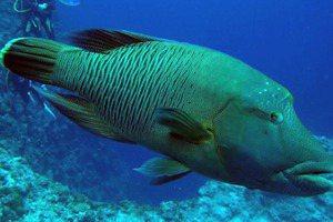 死了一尾龍王鯛後,看那些繼續被吃掉的鮪魚與鯊魚