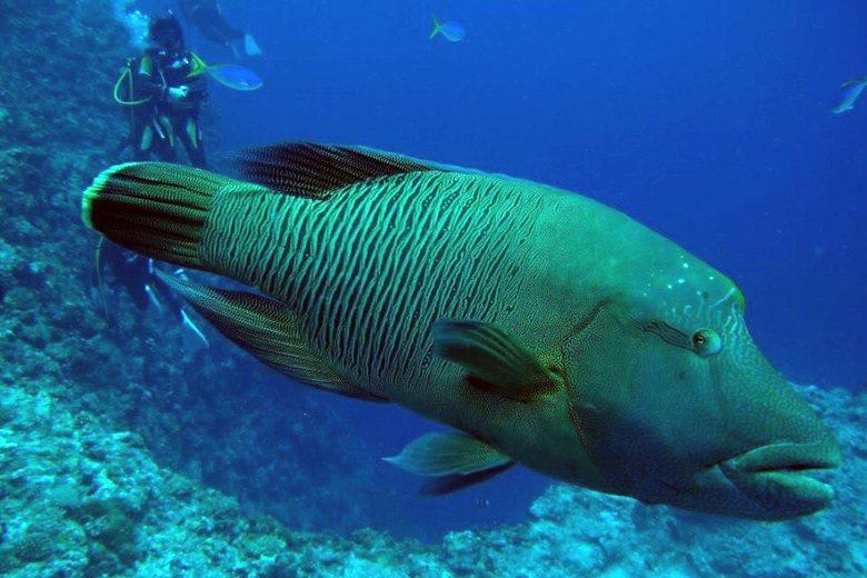 從龍王鯛之死看變形的海洋保育觀——那些繼續被吃掉的鮪魚與鯊魚