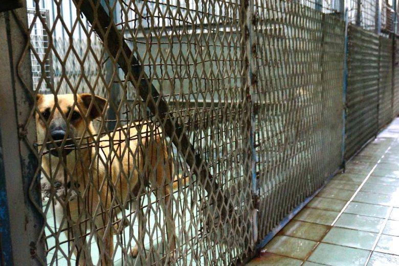 嘉義市動物收容所。 圖/聯合報系