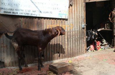 印度這頭南亞大象,台灣一直沒有摸清她的全貌。 記者潘俊宏/攝影