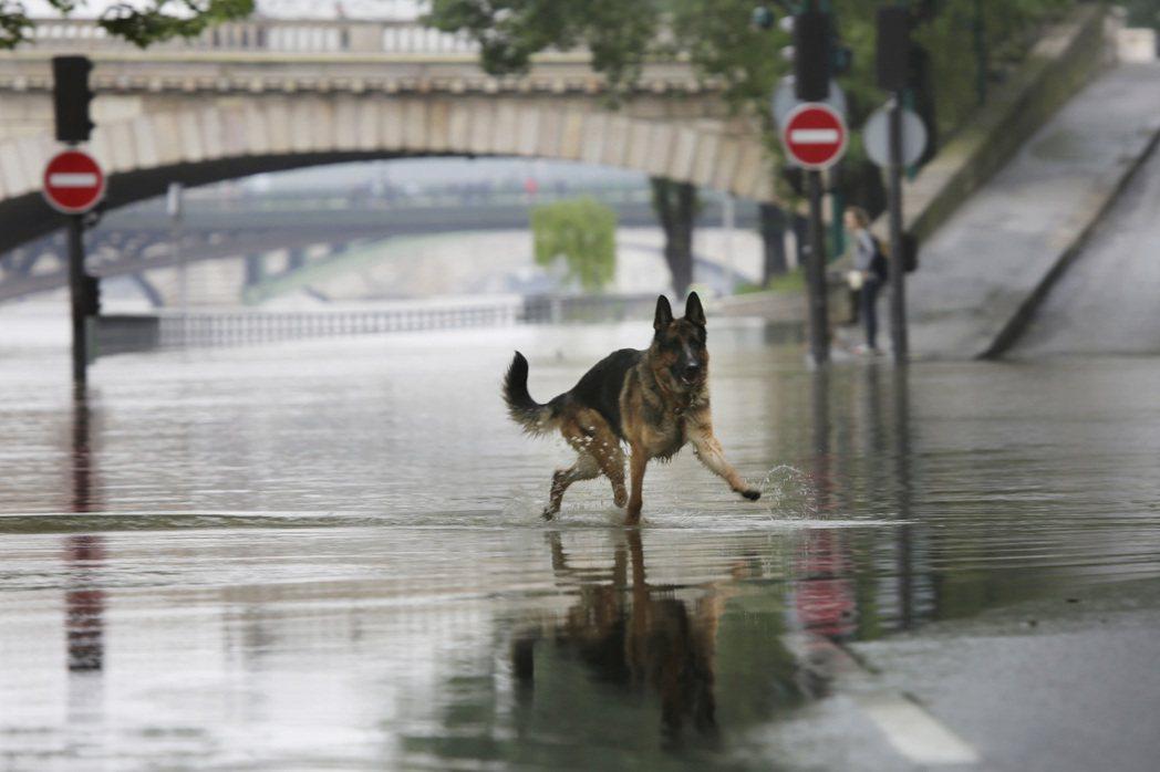塞納河的水位,巴黎市府非常關心。 圖/美聯社
