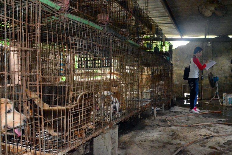 桃園大溪一處非法繁殖場。 圖/聯合報系資料照片