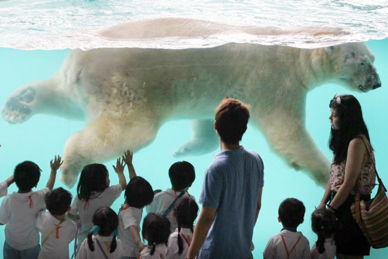 新加坡水族館內飼養了第一隻在赤道地區出生的北極熊。 圖/美聯社