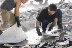歐盟紅牌警訊的背後:不負責任的水產市場管理該退場了!