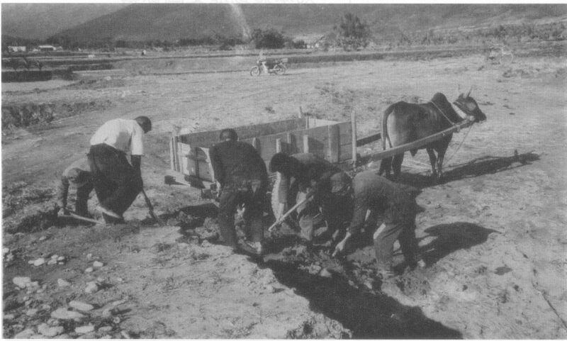 榮民載運客土以改善土質。 圖/退輔會台東農場提供