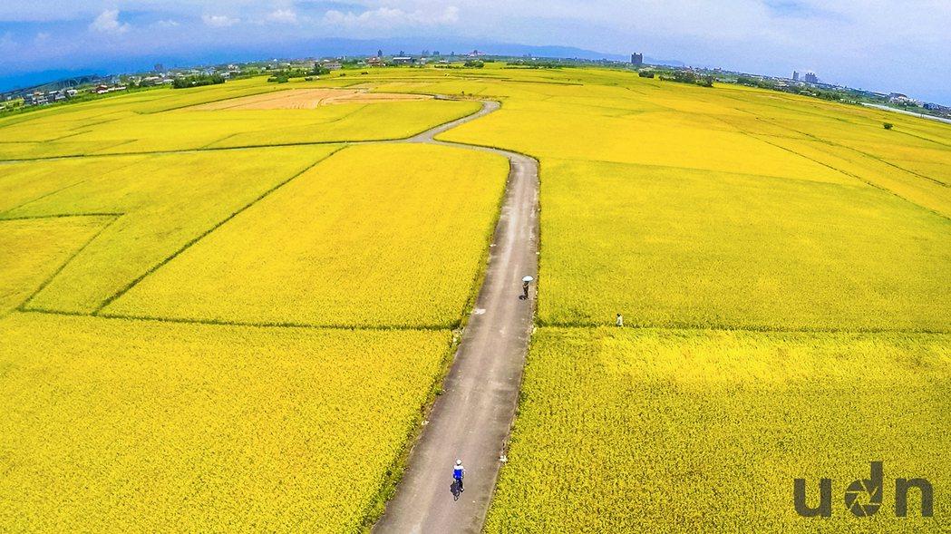 宜蘭冬山鄉三奇村奉尊宮周邊地區,有著大面積稻田與一條蜿蜒小徑,且沒有電桿影響,自...