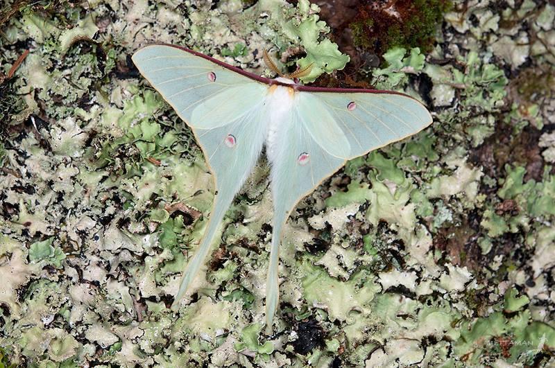 山區路燈可能干擾昆蟲飛行與求偶,或造成大量死亡,進而影響高山生態系。 攝影/吳士...