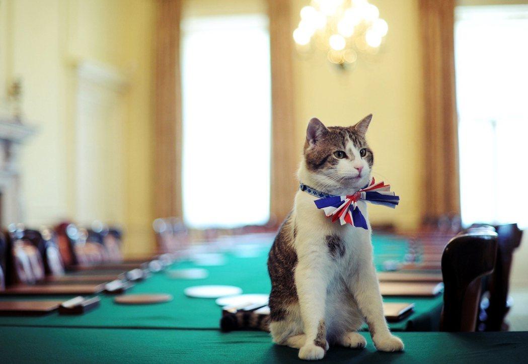現任內閣辦公室首席捕鼠官——「賴瑞貓」。 圖/路透社