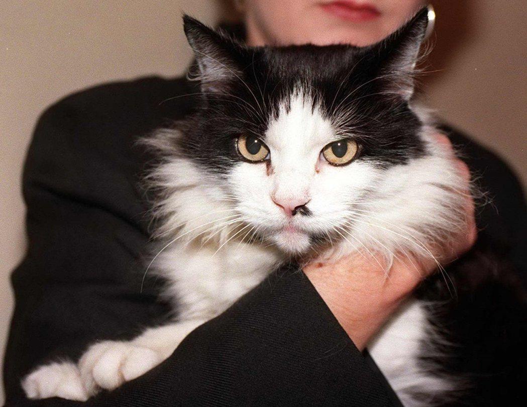 「韓福瑞貓」(前)曾被媒體稱為「唐寧街10號的真正主人」,但最後卻因布萊爾夫人(...