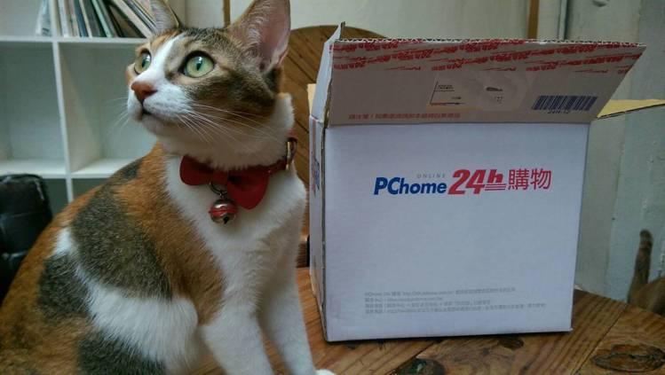 PChome24h購物從即日起舉辦當貓咪遇見紙箱活動。圖/PChome24h購物...